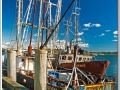 13 Wellfleet Harbor1